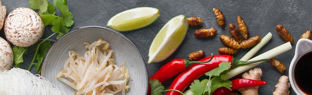 Germany eating insects-blog